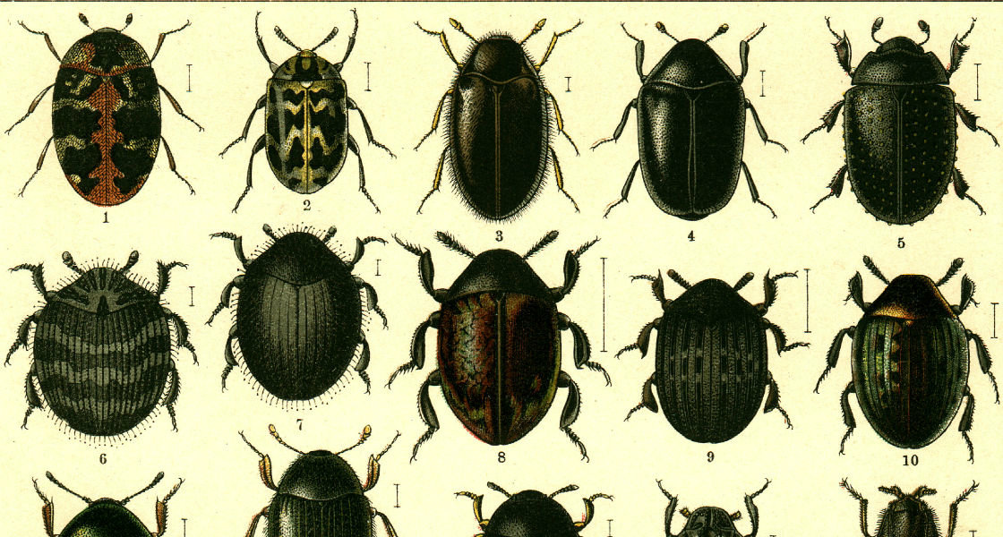"Georgiy Jacobson, ""Beetles Russia and Western Europe""."